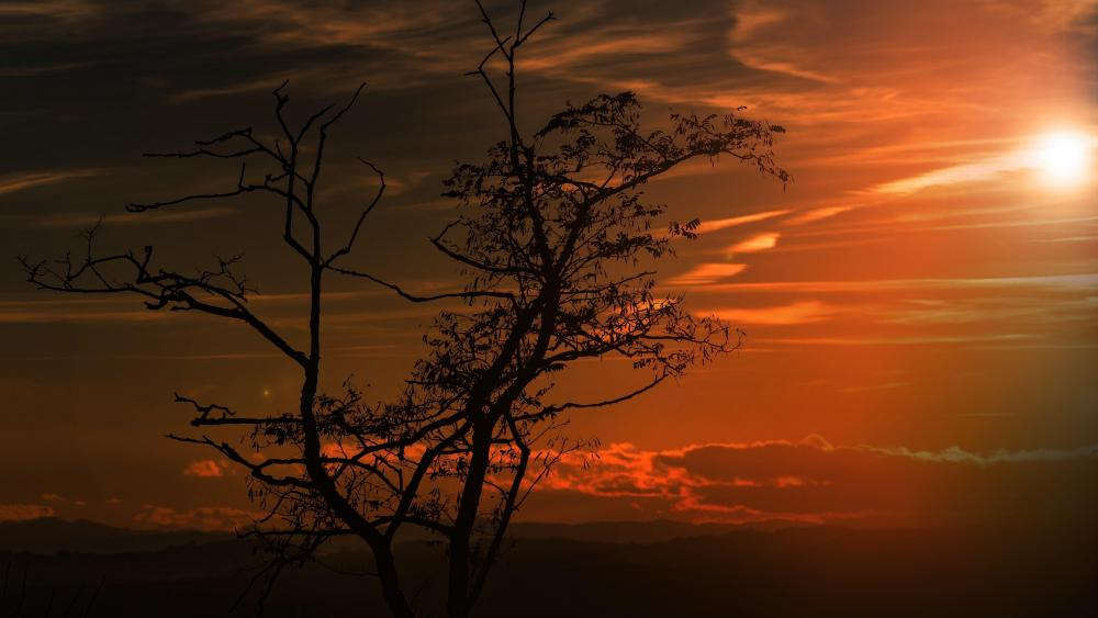 Lone tree silhouette in the sunset wallpaper