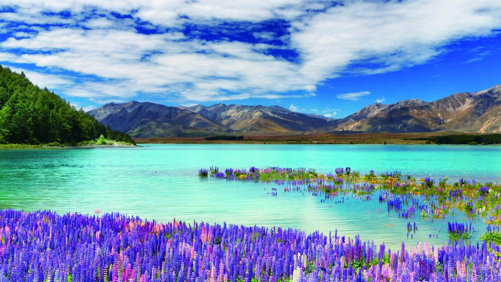 Lake Tekapo with lupin flowers wallpaper