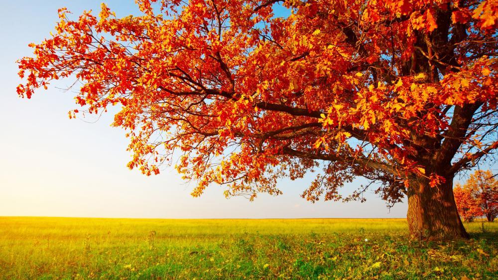 Lone tree at fall wallpaper