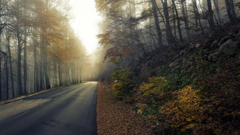 Road through the forest wallpaper