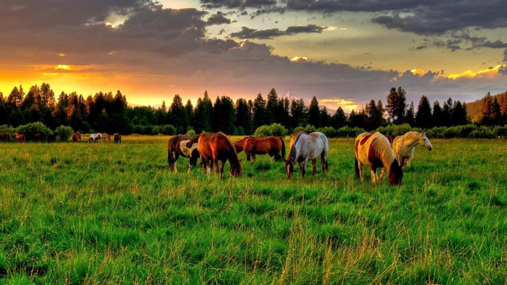 Grazing horses wallpaper