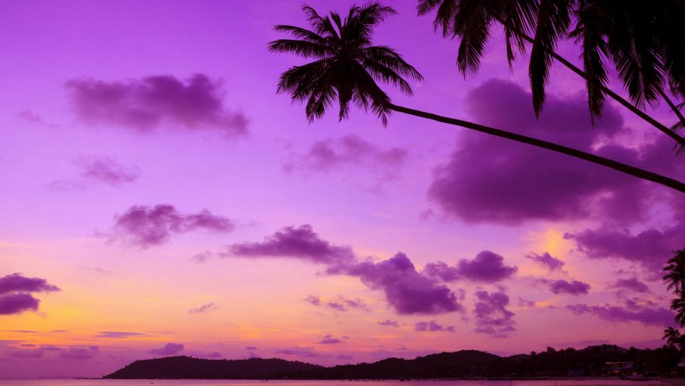 Purple sky with palms silhouette wallpaper