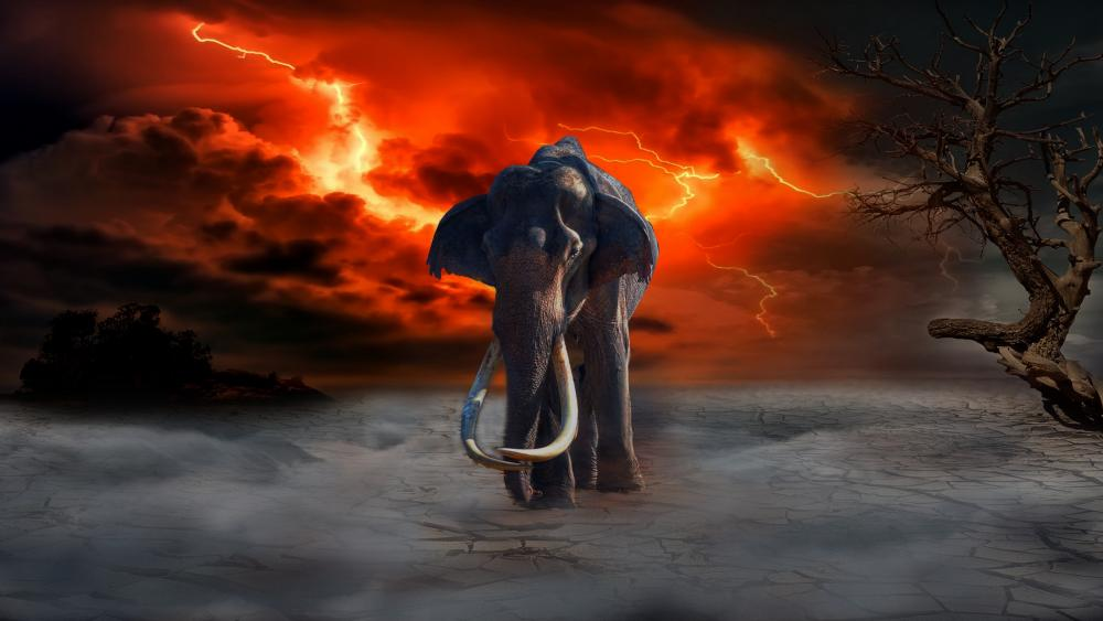Elephant in the storm wallpaper