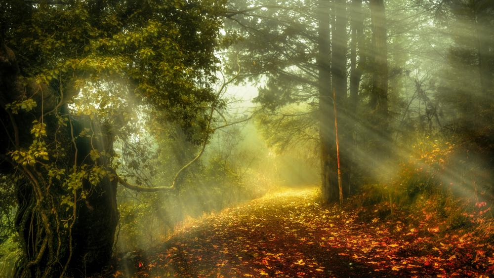 Mystical autumn sun rays in the forest wallpaper