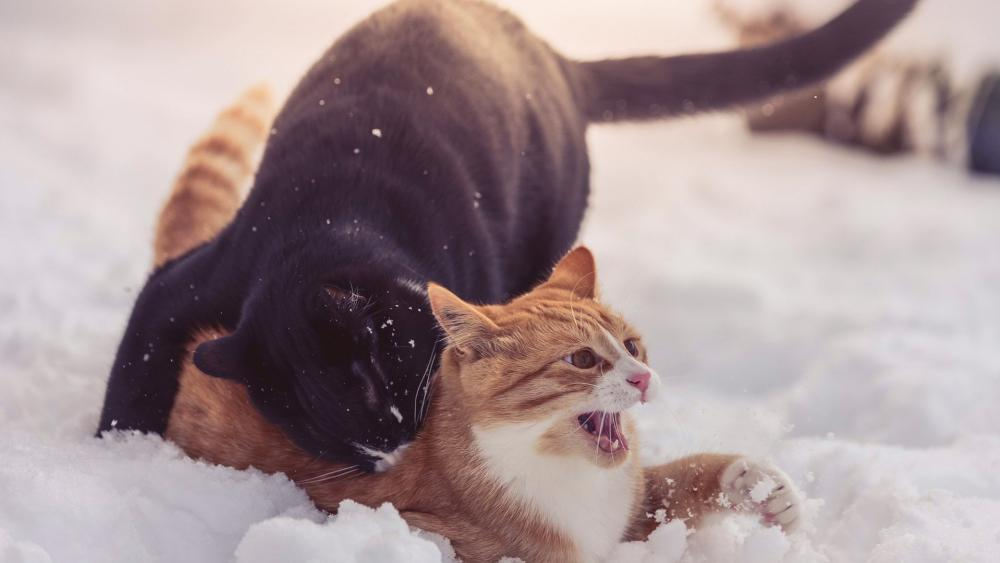 Cat fight in the snow wallpaper