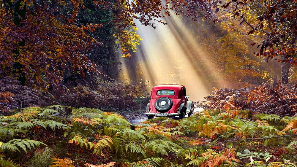 Red car in the fall forest wallpaper