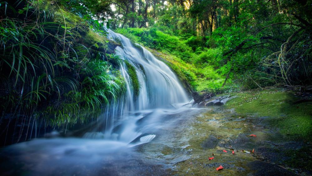 Waterfall in the thick green forest wallpaper