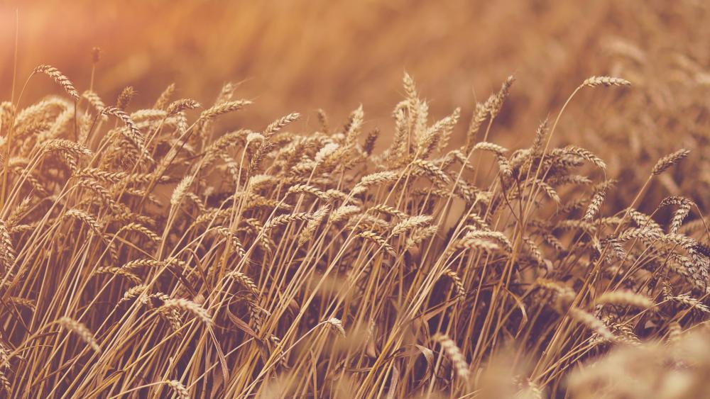 Grass close up wallpaper
