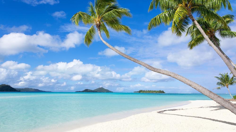 White sandy beach in Bora Bora wallpaper