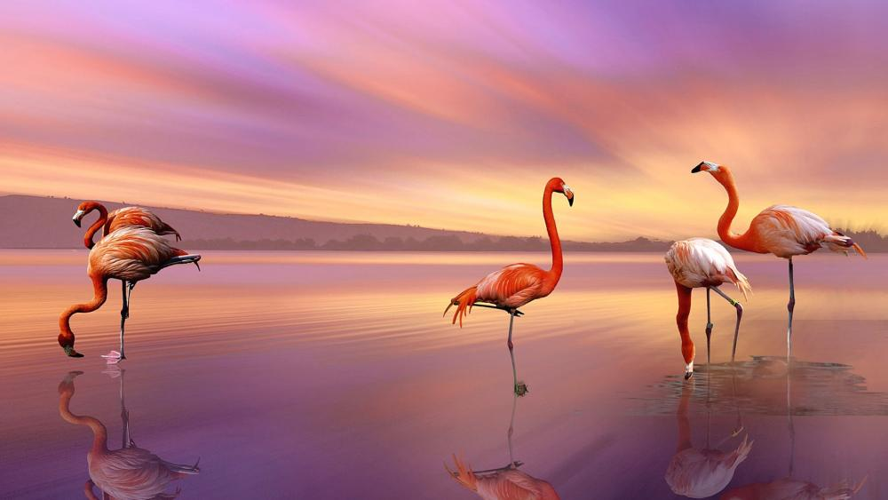 Flamingos in the sunset wallpaper
