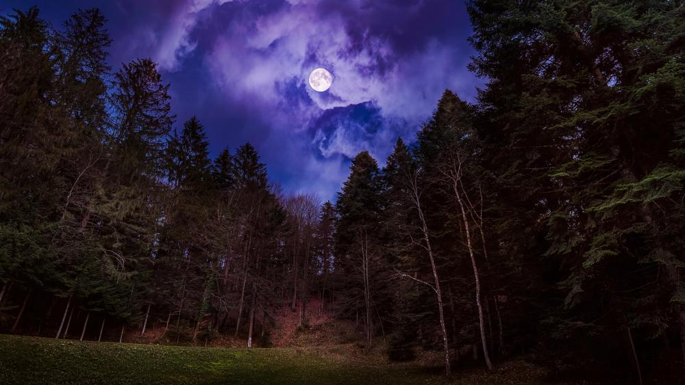 Mysterious forest in the full moon wallpaper