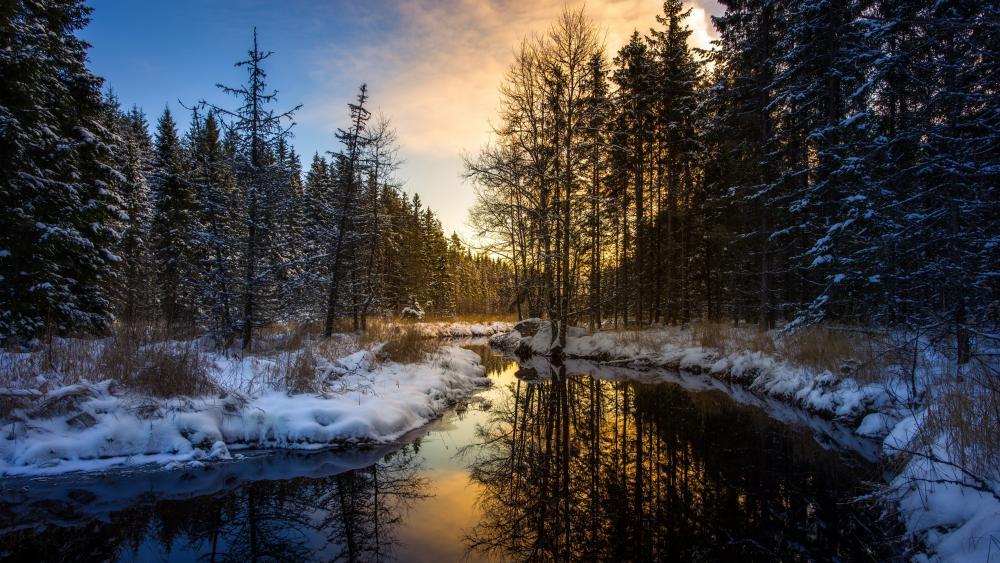 Winter afternoon landscape wallpaper