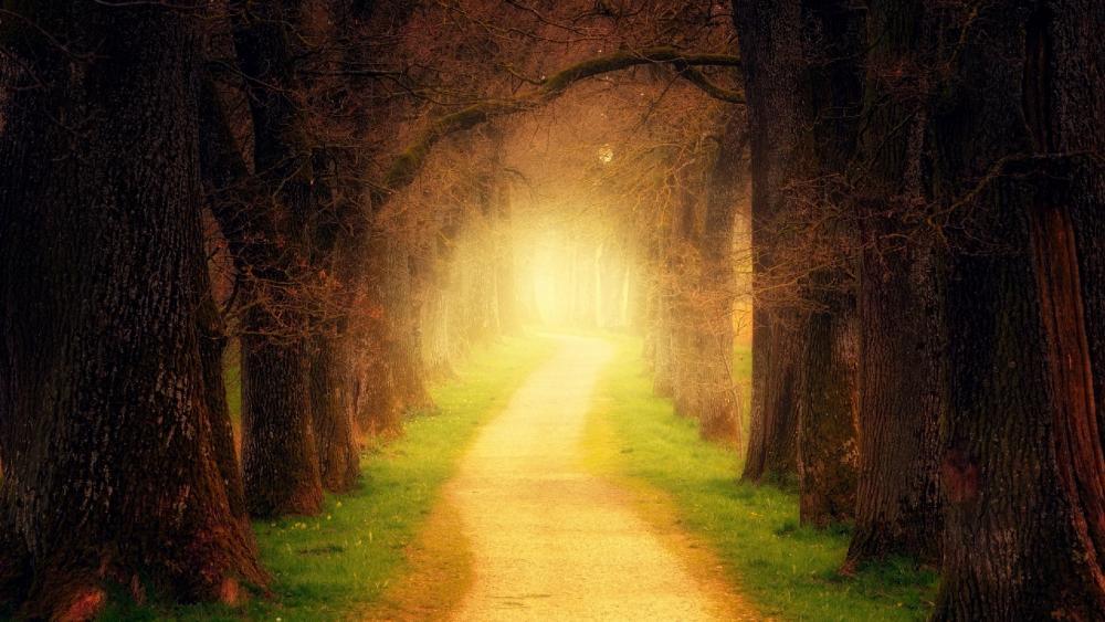 Mystic tree lane wallpaper