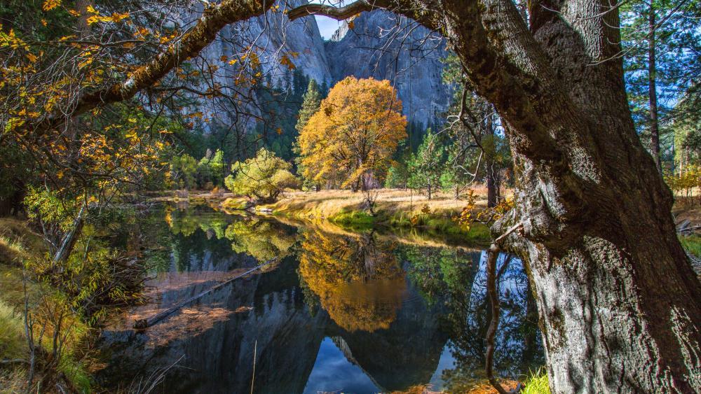 Merced River, Yosemite National Park wallpaper