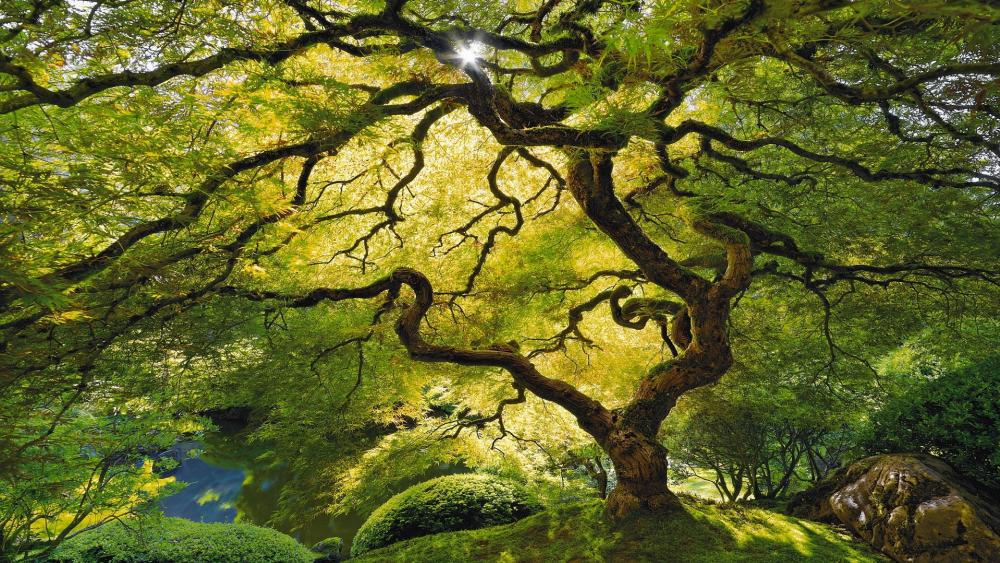 Beautiful tree wallpaper
