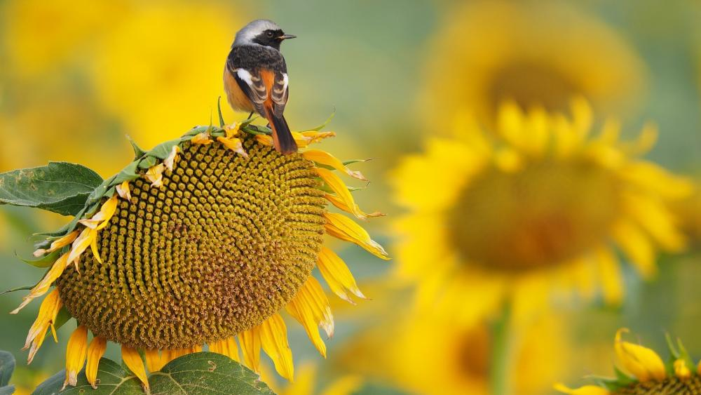 Little bird on a sunflower wallpaper