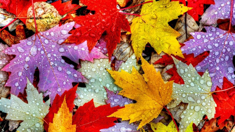 Leaves with rain drops wallpaper