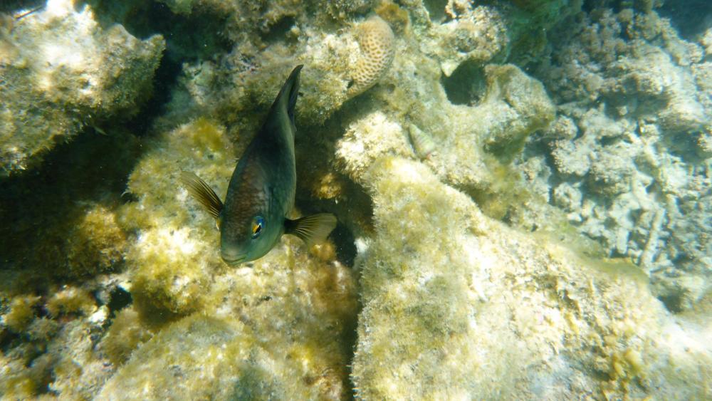 Coral reef fish wallpaper