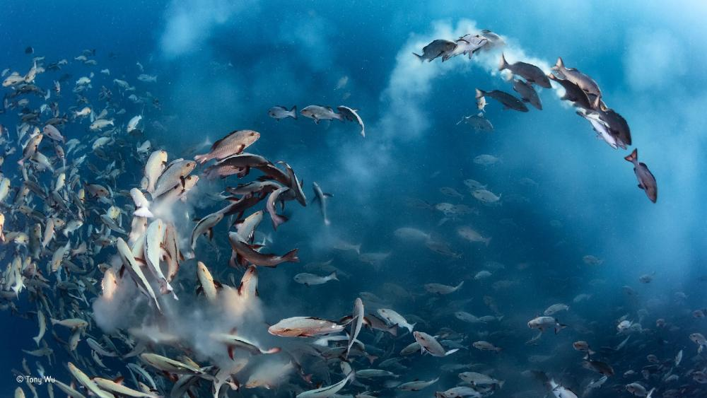Whirlpool underwater wallpaper