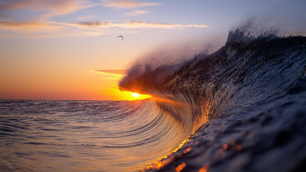 Wave in the sunset wallpaper