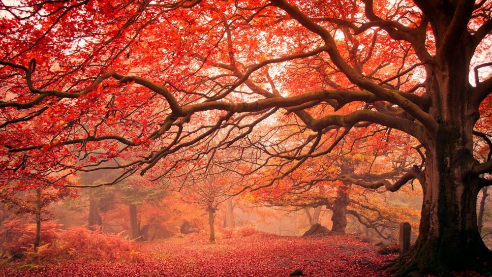 Red autumn trees wallpaper