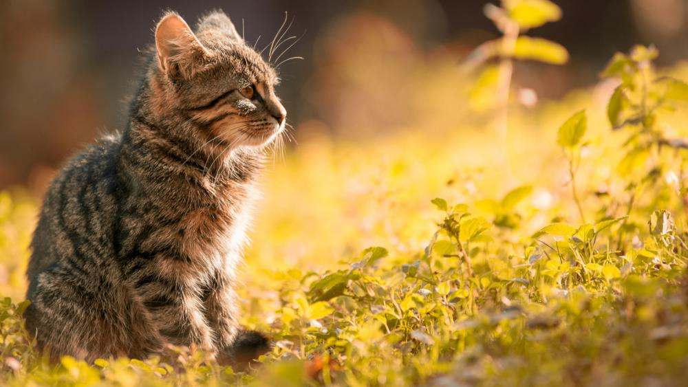 Outdoor cat wallpaper