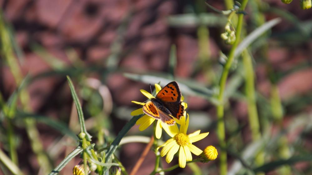 🦋 Butterfly in the autumn sun wallpaper