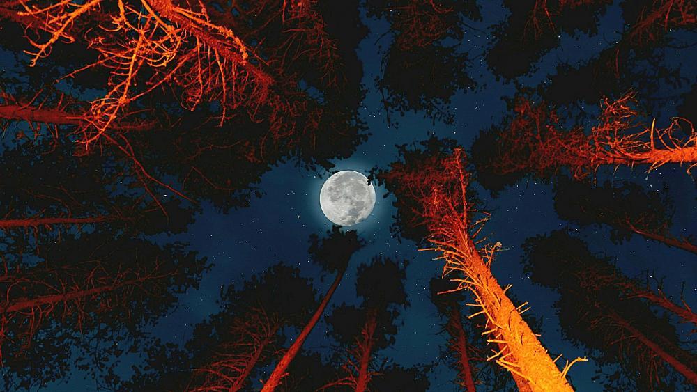 Full moon among the trees wallpaper