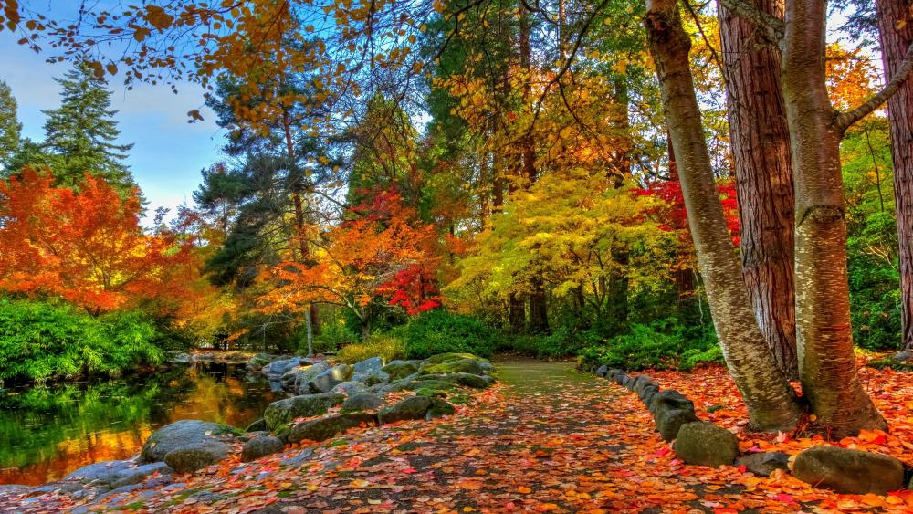 Colorful autumn wallpaper