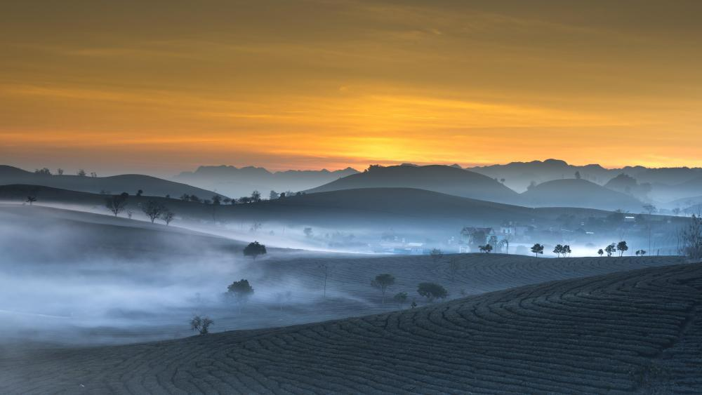 Early morning mist wallpaper