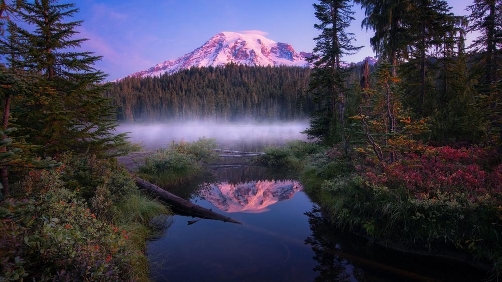 Misty morning in the Mount Rainier National Park wallpaper