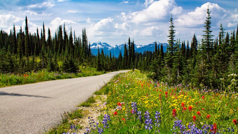 Wild flowers at the summit wallpaper