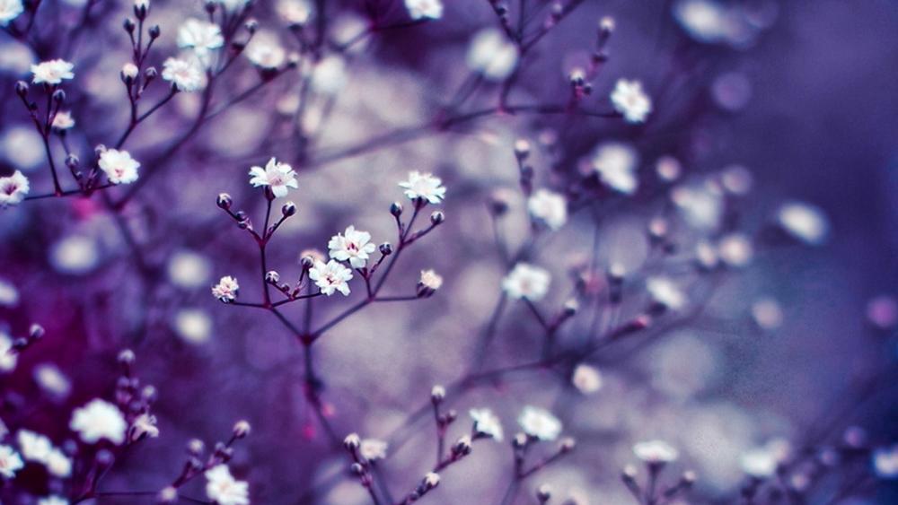 Little flowers wallpaper