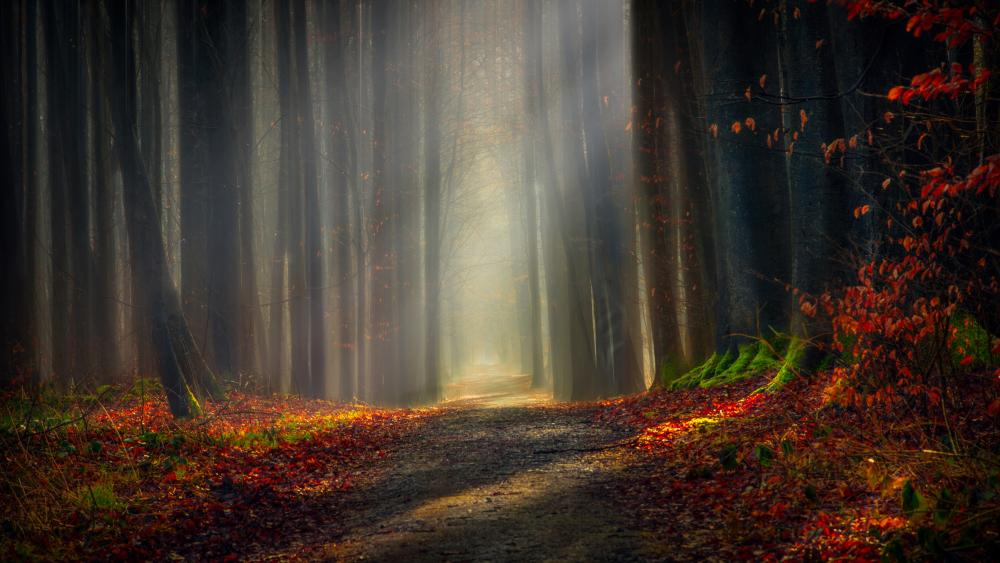 Dirt road in autumn forest wallpaper