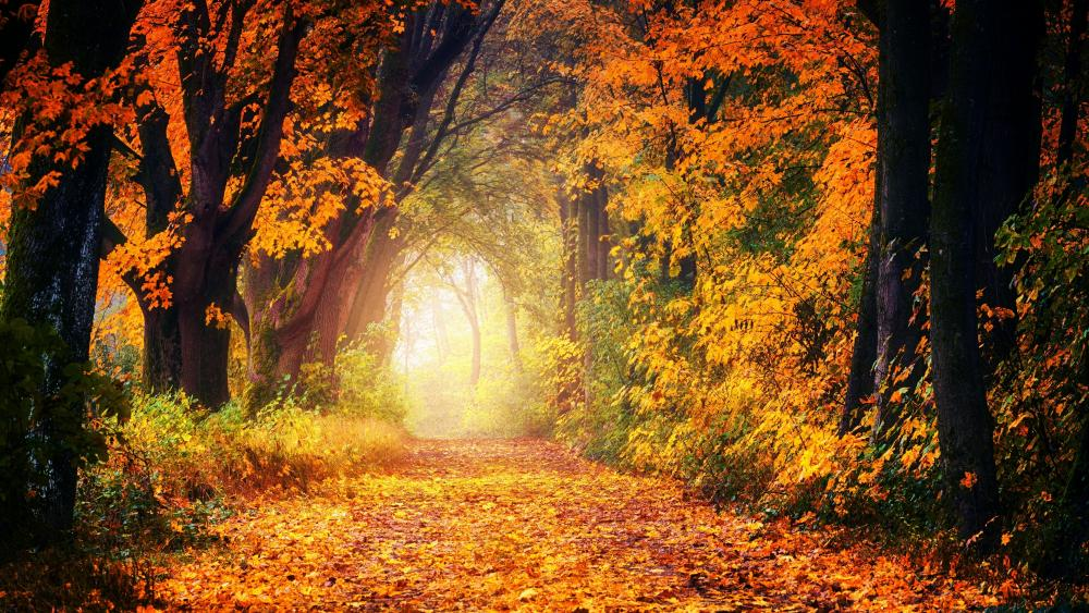 Autumn path 🍂 wallpaper