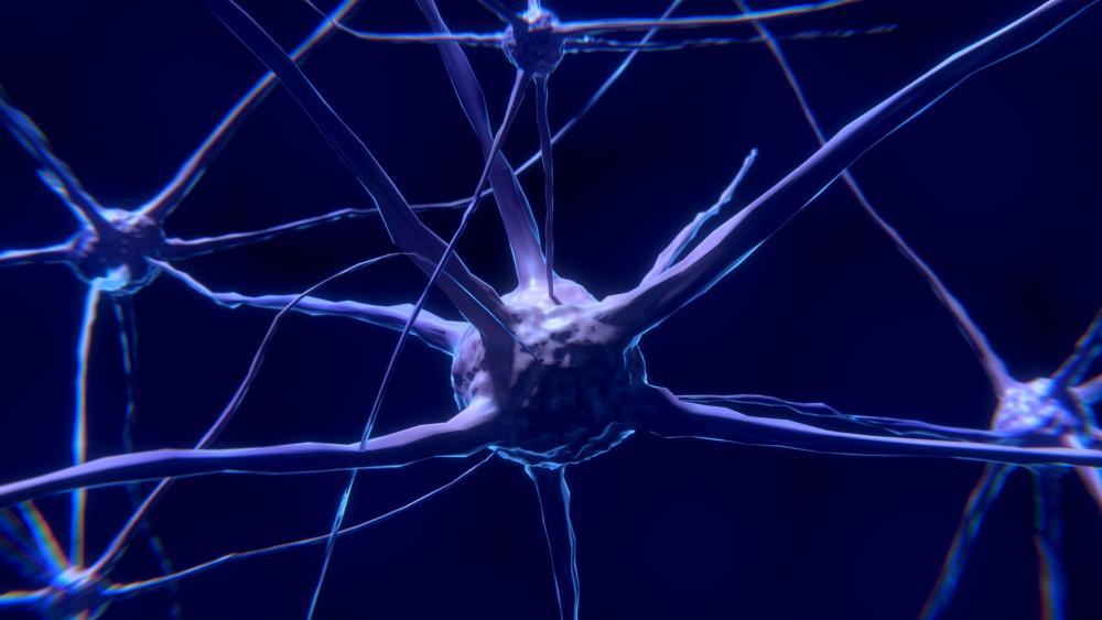 Nerve neuron synapse wallpaper