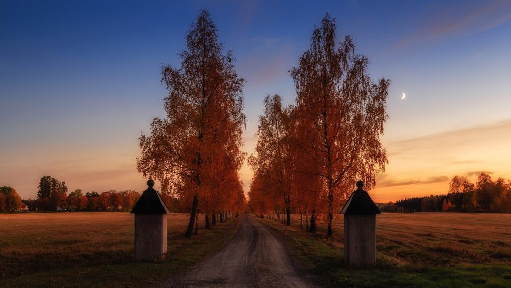 Beautiful autumn dawn scenery wallpaper