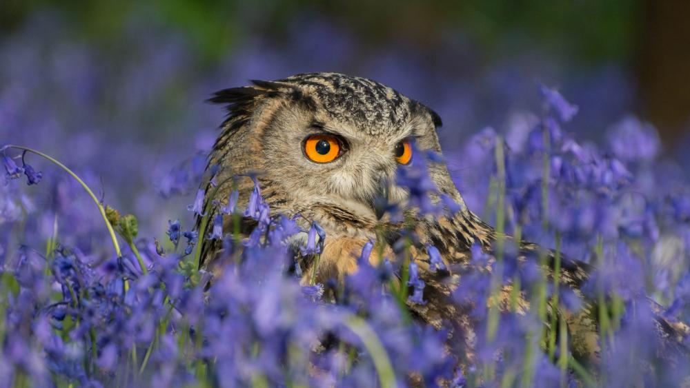 Owl in the flowers wallpaper