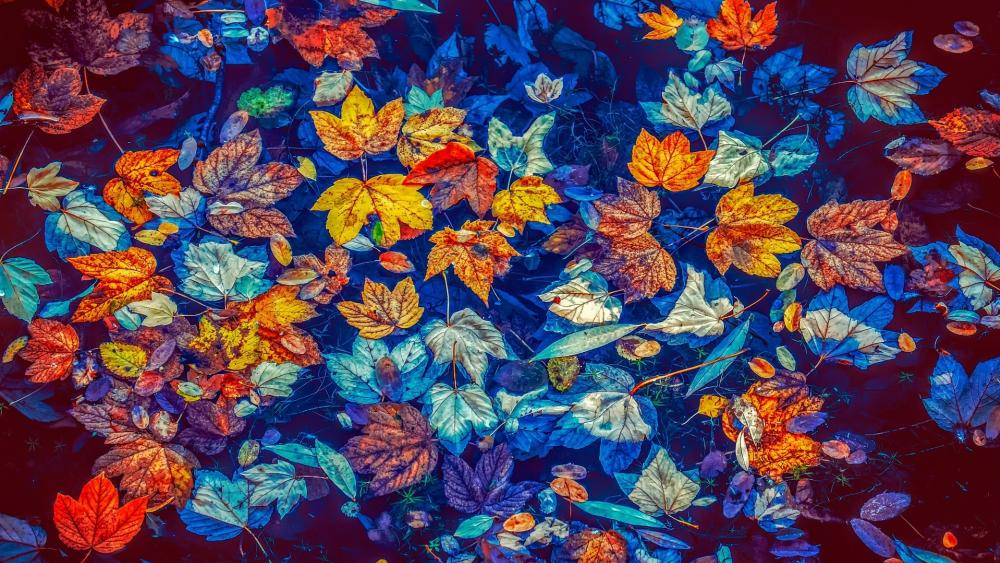 Fallen leaves in the puddle wallpaper