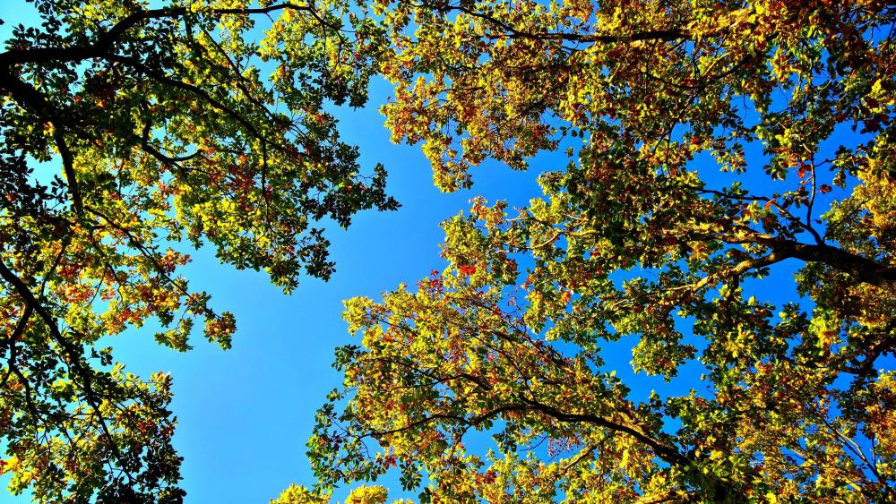 Blue sky with autumn leaves wallpaper