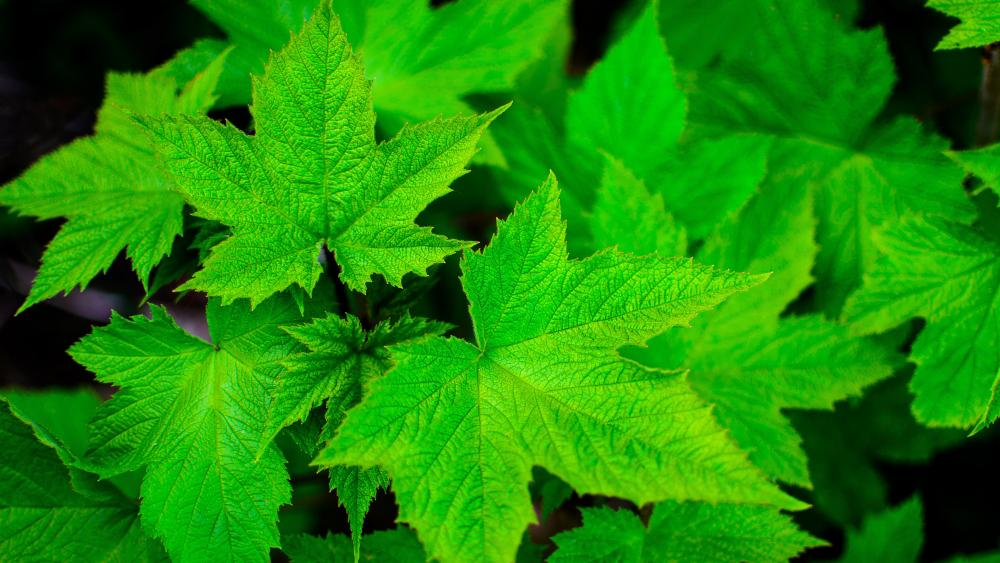 Green leaves close up photo wallpaper