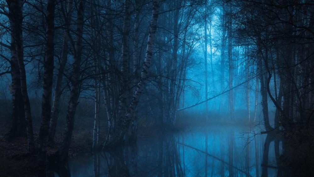 Swamp forest in the blue hour wallpaper