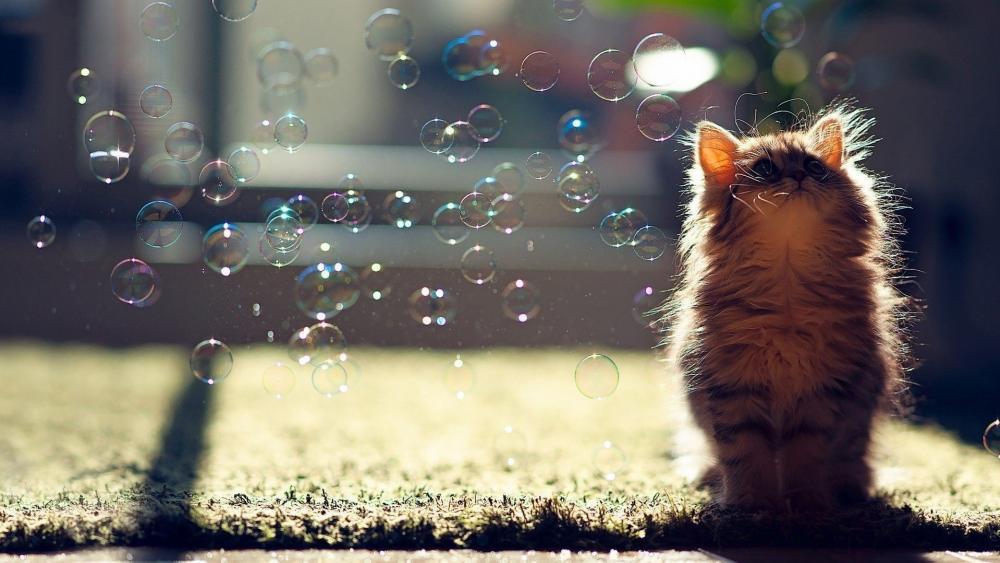 Cat & bubbles wallpaper
