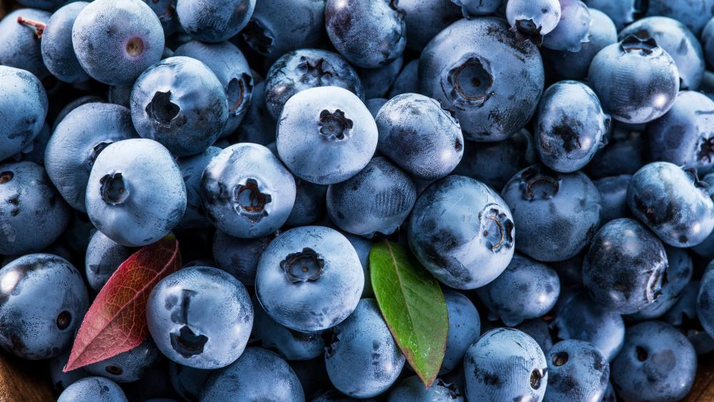 A lot of blueberries wallpaper