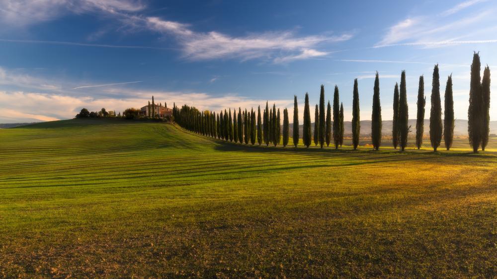 Cypress tree lane in Tuscany wallpaper