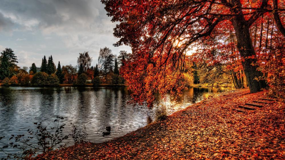 Reddish autumn wallpaper