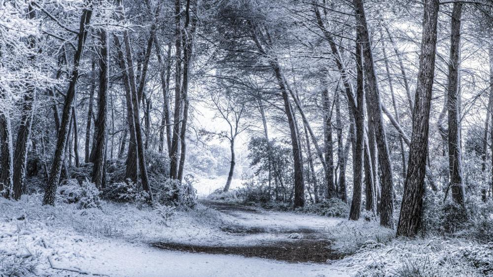 Snowy forest path wallpaper
