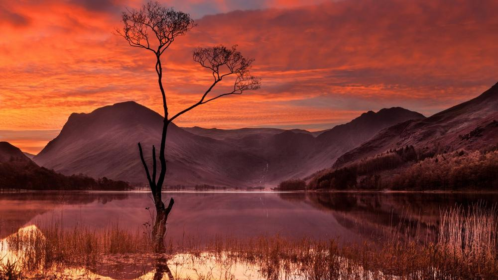 Lone tree in the lake wallpaper