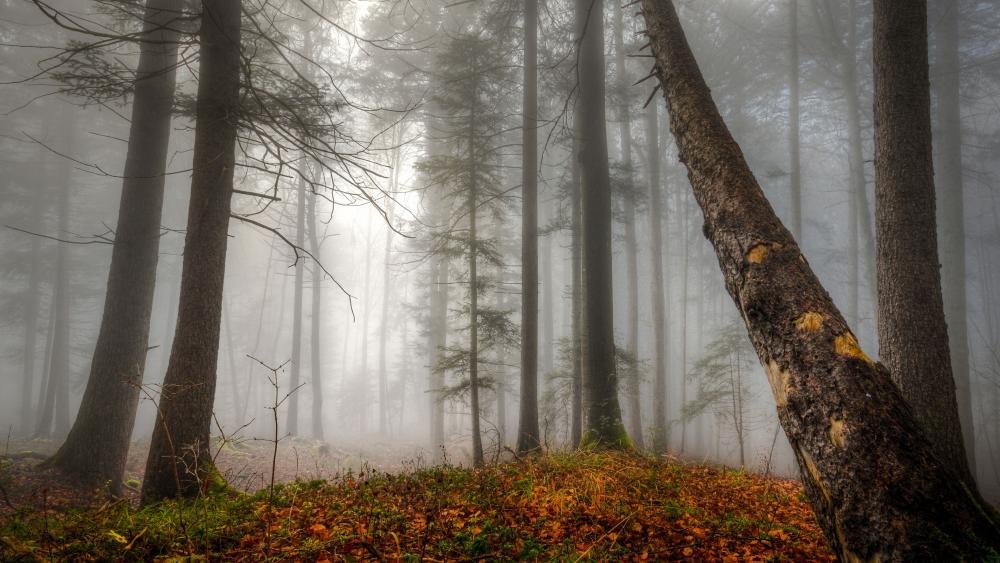 Foggy fall forest in Broddbo (Sweden) wallpaper