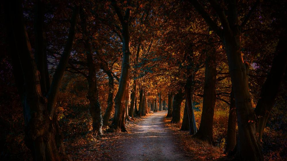 Tree lane at fall wallpaper